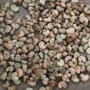 Raw cashew nuts 1
